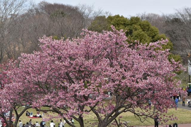 桜2017040200000003