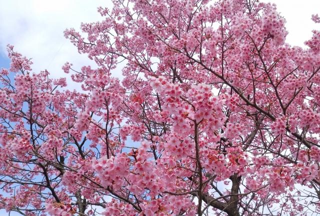 桜2017040200000007-1