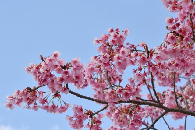 桜2017040200000008