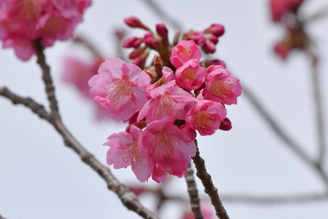 桜2017040200000012