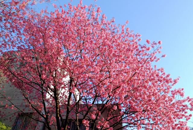 桜20170400000004