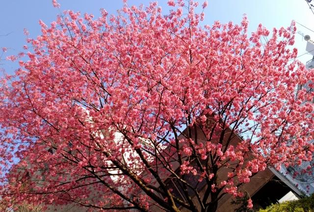 桜20170400000005