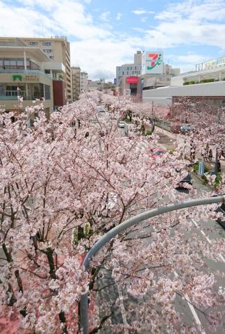 桜20170400000009