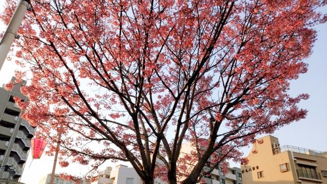 桜20170400000013