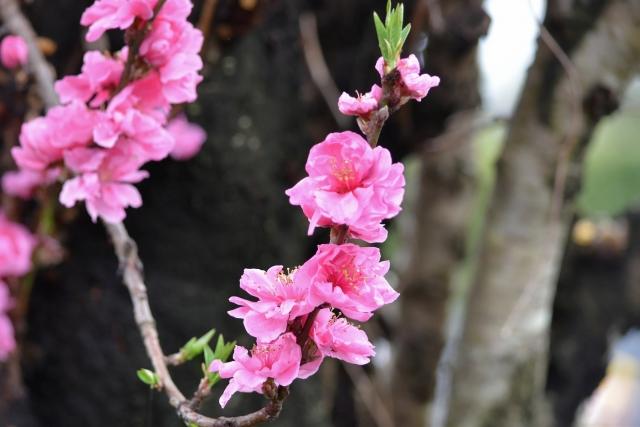桜20170400000016
