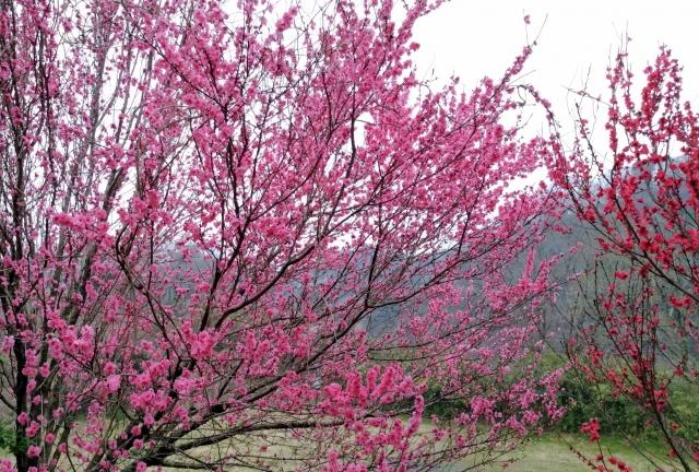 桜20170400000018