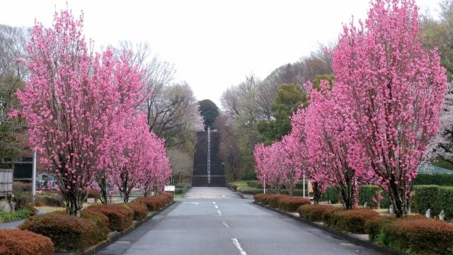 桜20170400000020