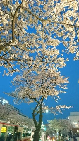 たまプラ桜201704000001