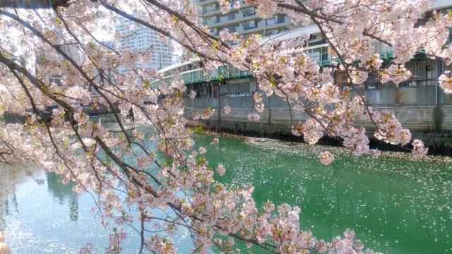 桜舞い散る20170414000003