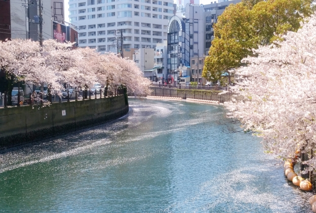 桜舞い散る20170414000007