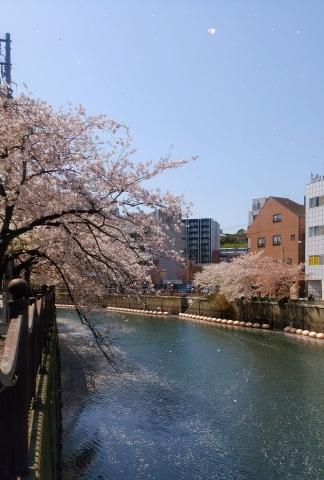 桜舞い散る20170414000011