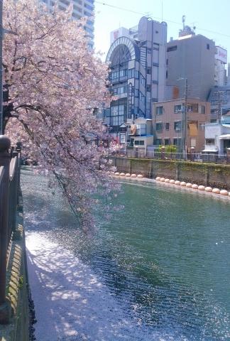桜舞い散る20170414000012