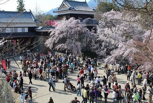 別荘 上田城桜 (2)