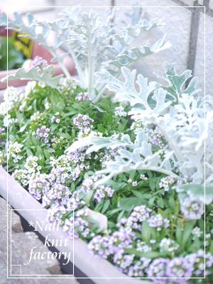 garden2017-10.jpg