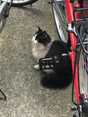 2017.2.5猫1