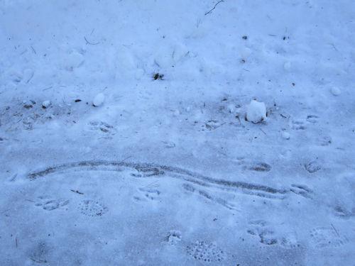 鹿も滑ってる2