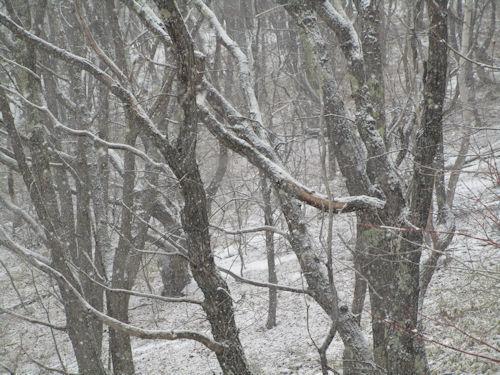 晴れ、曇り、雪・・5