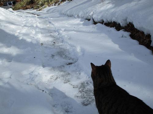 雪道は冷たいんだよ~1