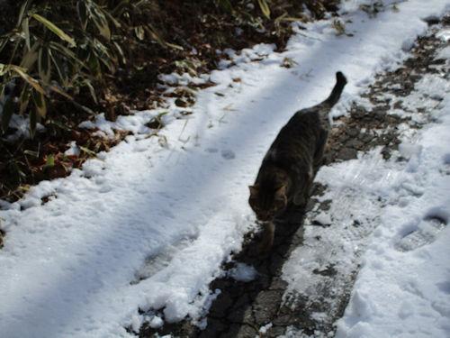 雪道は冷たいんだよ~2