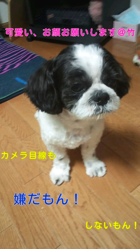 moblog_03463b53.jpg