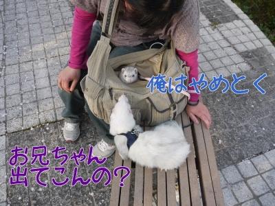 実家に里帰り (9)