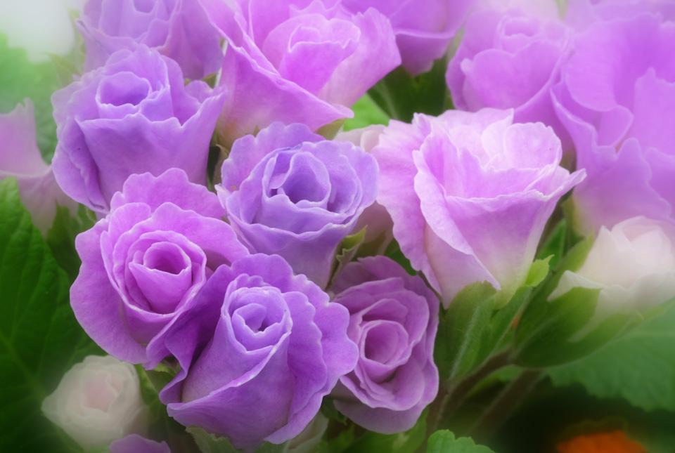 7767 バラ咲きジュリアン 960×645