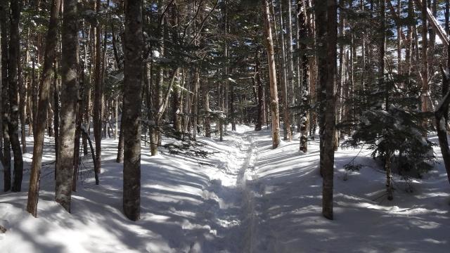 雪上トレイル