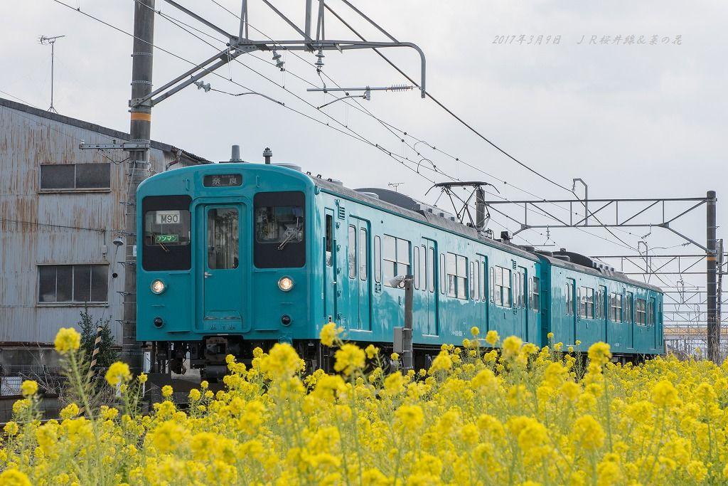 20170309 万葉まほろば線&菜の花
