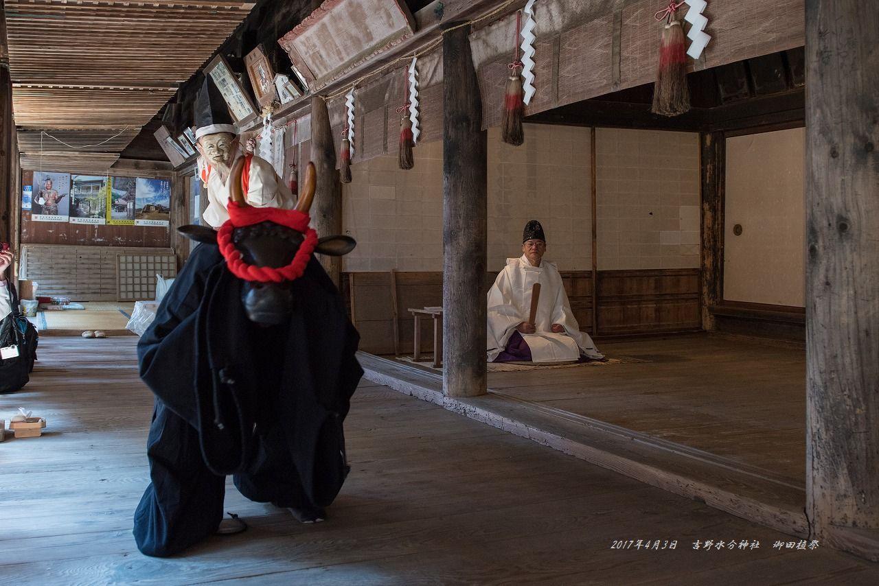 201704 吉野水分神社 御田植祭 (4)