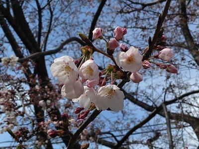 kobukun_03.jpg