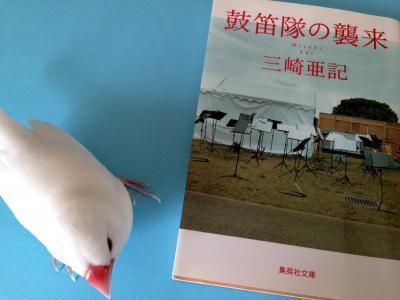 kotekitai_.jpg