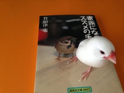 suzumenochun_.jpg