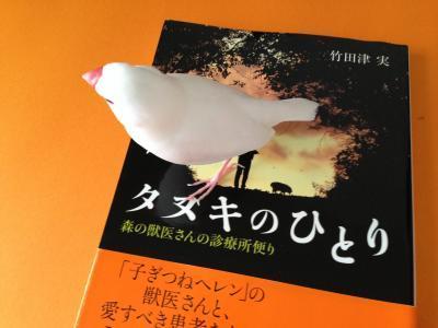 tanukinohito_.jpg