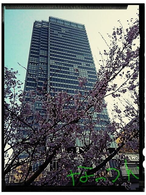20170316仕事帰り桜