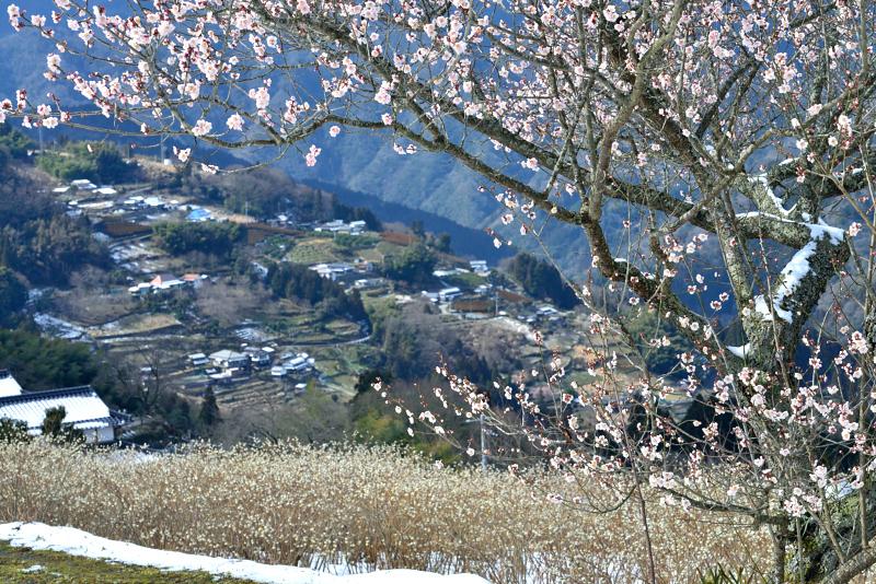 「まもなくの春3」(三椏の花)