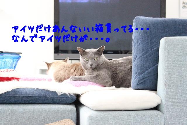 64vxoQrnEkgH3UH1486966420_1486966486.jpg