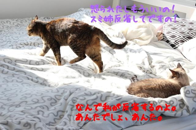 7NvzzeKMv3IfQ5I1488964603_1488964700.jpg