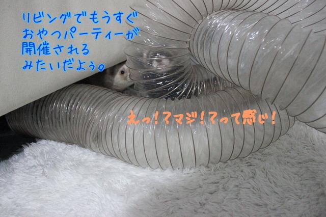 Z09BCT69i76digM1491352073_1491352165.jpg