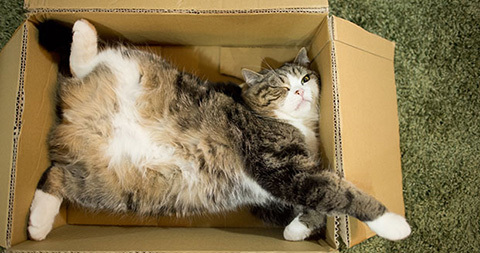 Maru-relaxing-at-home_tcm30-466620