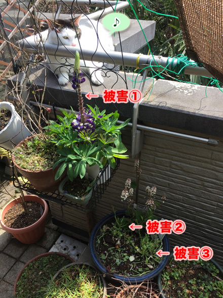 flower1_040217
