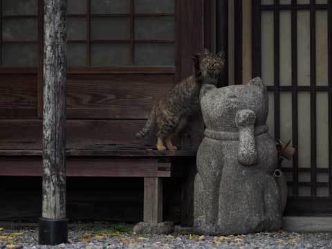 mitsumitsukoshinekozukushi_sub12