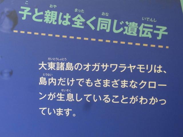 R0018787.jpg