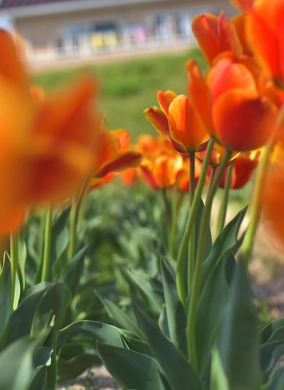 春・るん・るん・♪