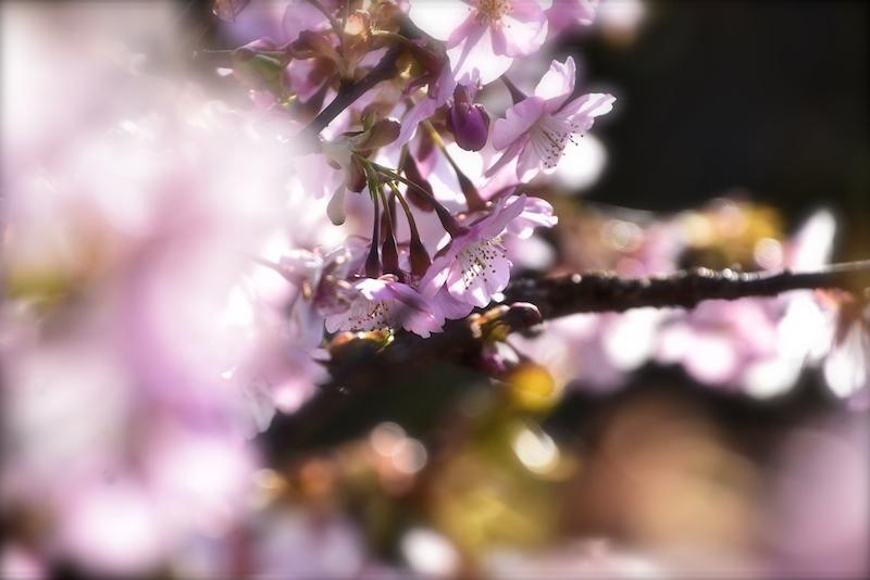 春きらきら