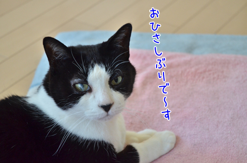 DSC_7710_2.jpg
