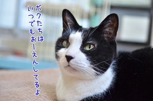 DSC_7779_2.jpg