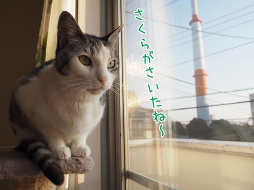 P2170024_2.jpg