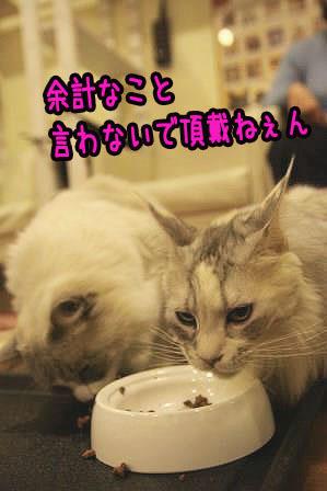 まや嬢20170310-01