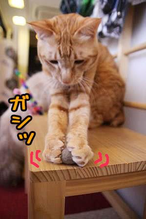 ちゃんぷ20170322-02
