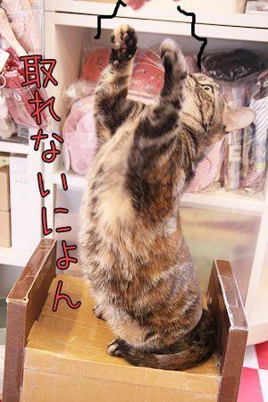 いちご先輩20170324-05